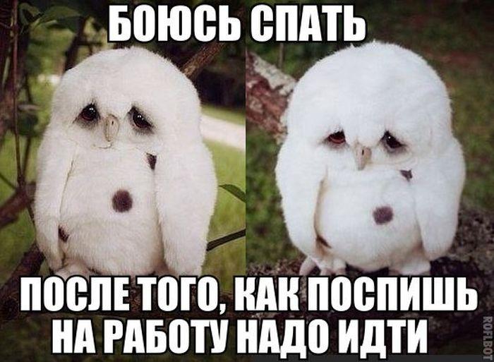 201505090006-boyus-spat-posle-togo-kak-pospish-na-rabotu-nado-idti-kashamalasha-com