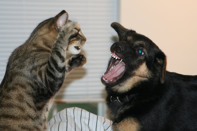 fighting_like_cats_and_dogs_2_by_wldjeepgrl