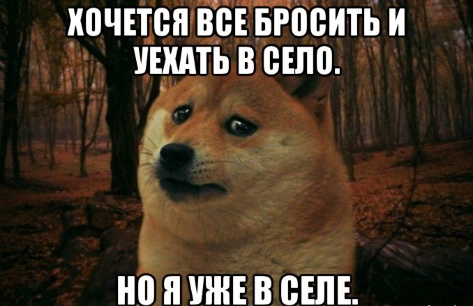 sad-doge_96872223_orig_
