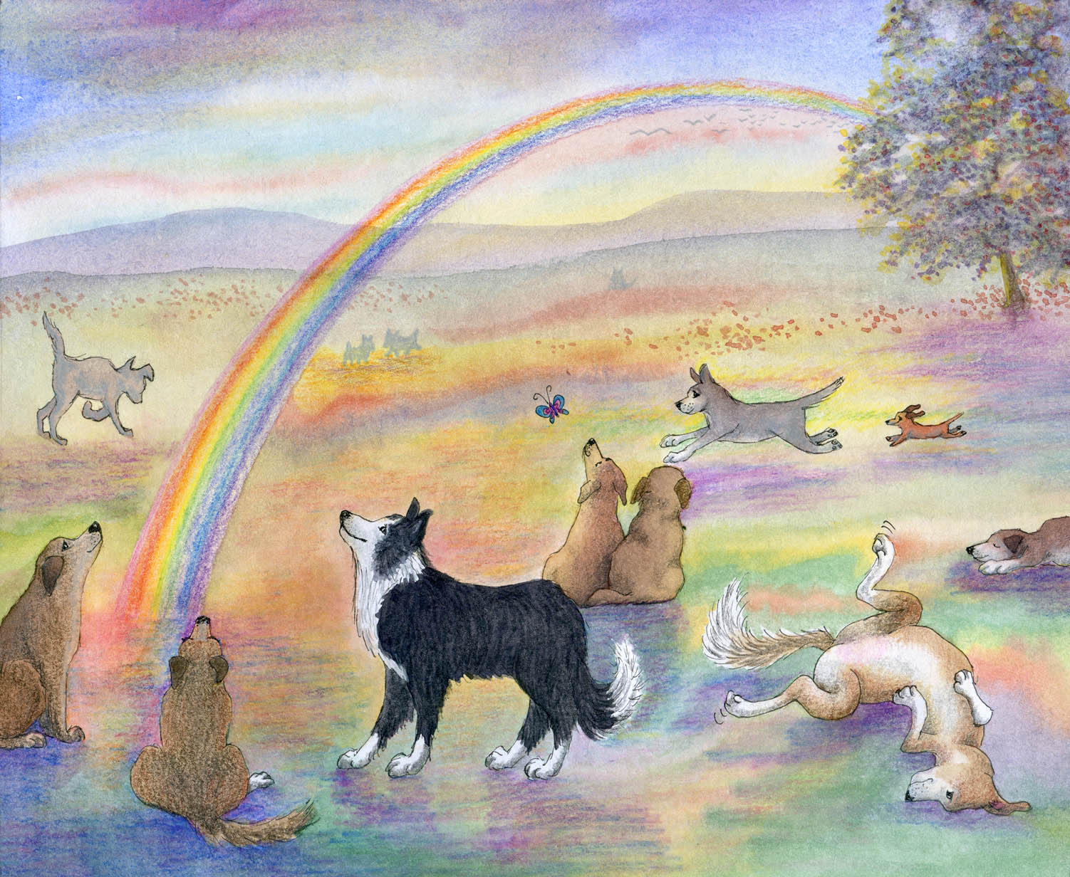 8x10-rainbow-bridge-with-border-collie-v1
