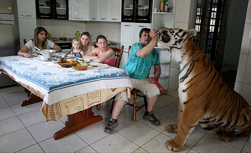 tigerpet14