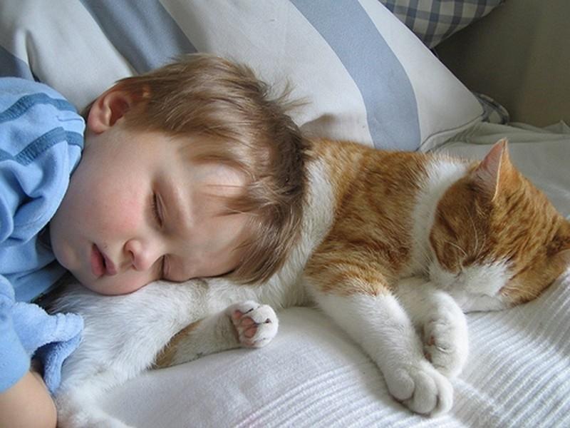 childrencats_11