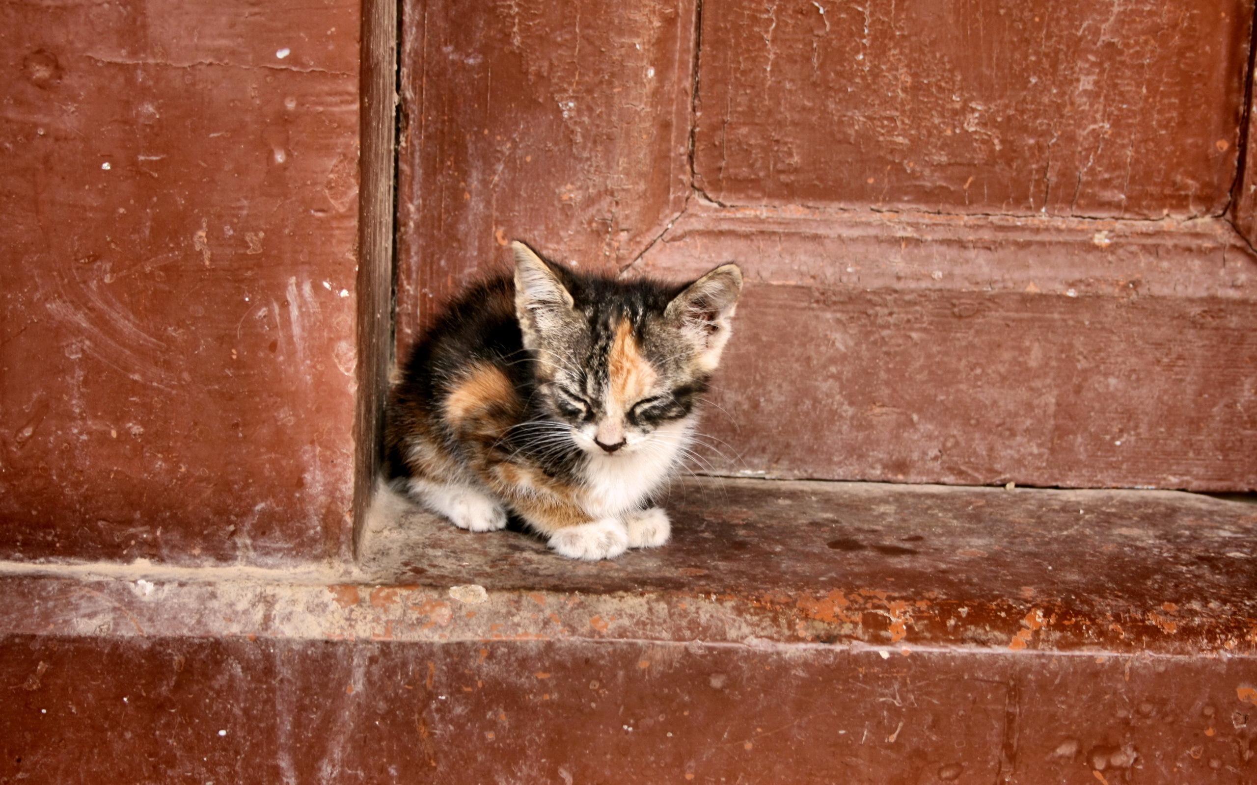 www-getbg-net_animals___cats_lonely_kitten_041784_