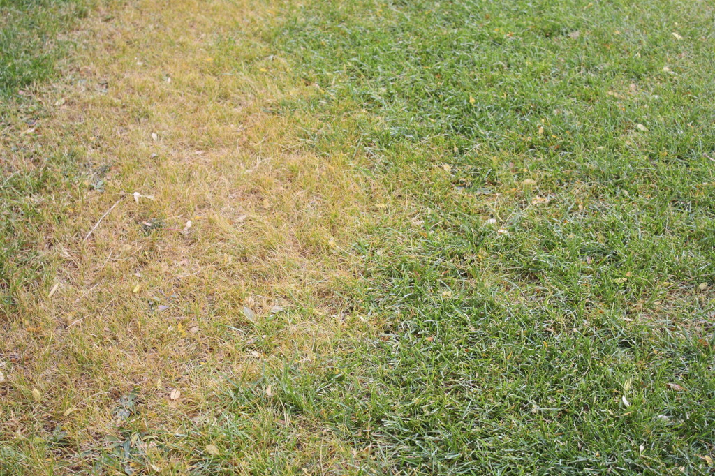 Grass-iStock_000040143480_Medium-1024x682