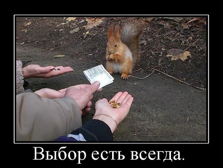 822973_vyibor-est-vsegda