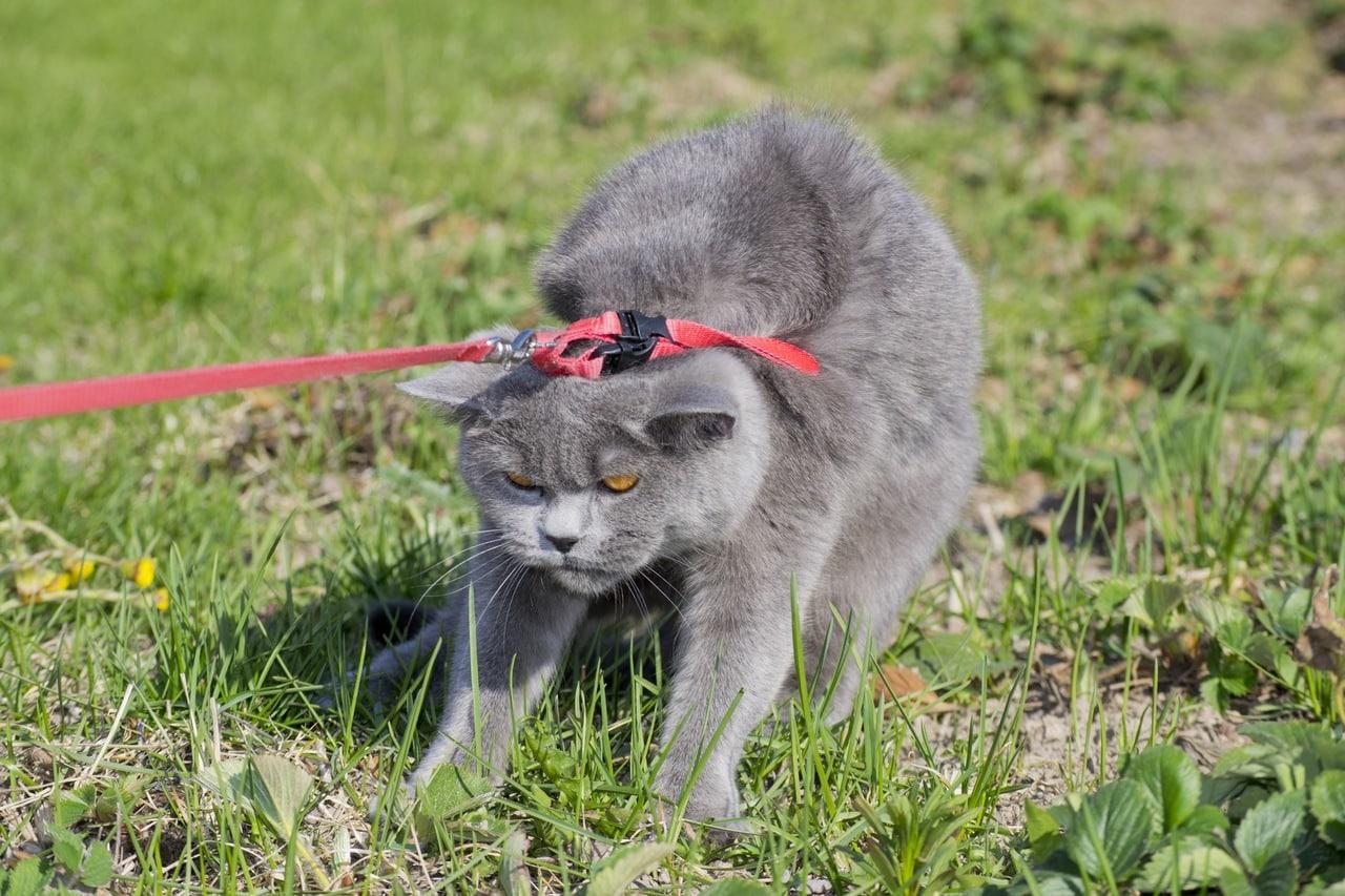 cat-1-83