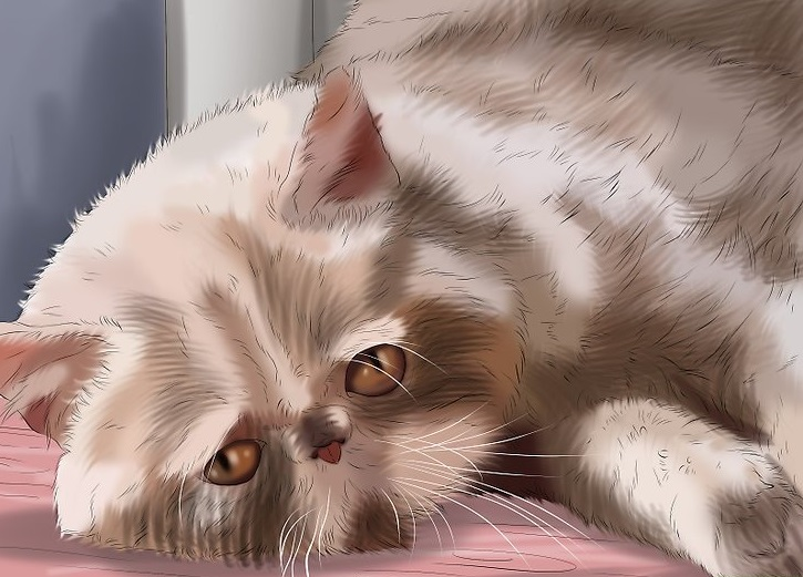 v4-728px-Tell-if-Your-Cat-Is-Depressed-Step-2-Version-2